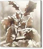 Oak Tree Leaves Frozen In Ice Canvas Print