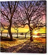 Oak Trees At Sunrise Canvas Print
