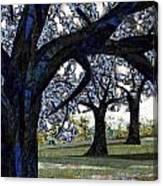 Oak Veiling Canvas Print