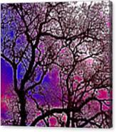 Oaks 6 Canvas Print