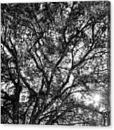 Oak's Web Canvas Print