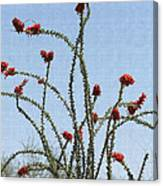 Ocatillo With Red Blossoms Canvas Print