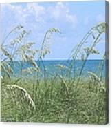 Ocean And Oats Canvas Print