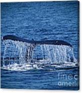 Ocean Dive Of The Humpback Whale Canvas Print