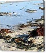 Ocean Life On The Beach Canvas Print