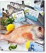 Ocean Perch On A Fish Counter Canvas Print