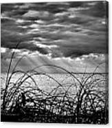 Ocean Rays Black And White Canvas Print