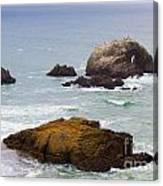 Ocean Rocks Near San Francisco Ca Cliff House Canvas Print