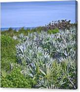 Ocean Vegetation Canvas Print