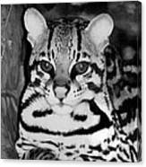 Ocelot In Repose Canvas Print