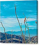 Ocotillo At Top Of Ladder Canyon With Salton Sea In Distance In Mecca Hills-ca Canvas Print
