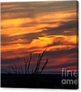 Ocotillo Sunset Canvas Print