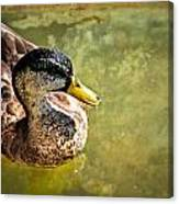 October Duck Canvas Print