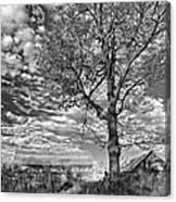 October Evening Monochrome Canvas Print