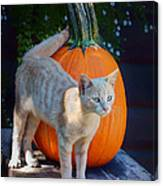 October Kitten #1 Canvas Print
