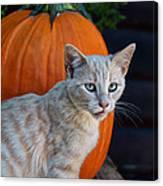 October Kitten #3 Canvas Print