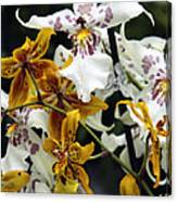 Gold And White Orchids Canvas Print