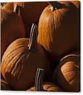 October Pumpkins Canvas Print