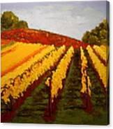 October Vineyard Canvas Print