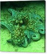 Octopus In The Sand Canvas Print
