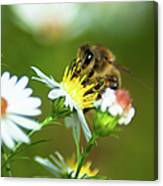 Of Bee And Flower Canvas Print
