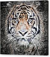 Of Tigers And Stone Canvas Print