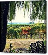 Off Into The Horizon Wine Country Views Canvas Print