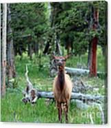 Oh Dear I See A Deer Canvas Print