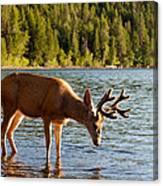 Oh Deer Is That Me Canvas Print