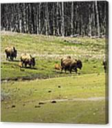 Oh Give Me A Home Where The Buffalo Roam Canvas Print