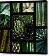Oh My Cacti Canvas Print