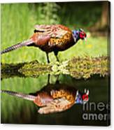 Oh My What A Handsome Pheasant Canvas Print