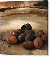 Oh Nuts Canvas Print