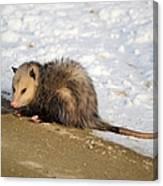 Oh Possum Canvas Print