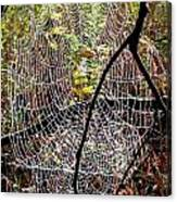 Oh What A Web We Weave Canvas Print