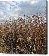 Ohio Corn Canvas Print