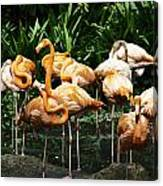 Oil Painting - Number Of Flamingos Inside The Jurong Bird Park Canvas Print