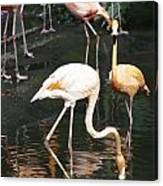 Oil Painting - The Head Of A Flamingo Under Water In The Jurong Bird Park In Singapore Canvas Print