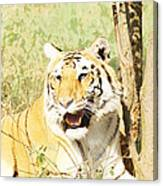 Oil Painting - An Alert Tiger Canvas Print