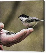 Oil Painting Black-capped Chickadee  Canvas Print