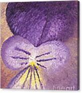 Oil Painting Of Pansy - Viola Tricolor Canvas Print