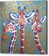 Oil Painting Of Three Gorgeous Giraffes Canvas Print