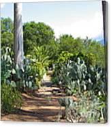 Ojai Desert Garden Canvas Print