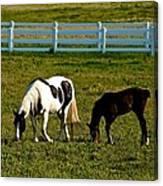 Ok Horses Canvas Print