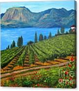 Okanagan Vineyard Canvas Print