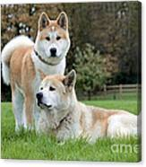 Old And Young Akita Inu Canvas Print