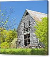 Old Barn In Spring Maine Canvas Print