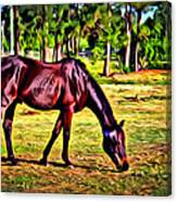 Old Bay Horse Canvas Print