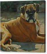 Old Boxer Canvas Print