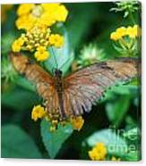 Old Butterfly Canvas Print